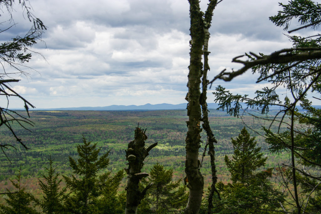 View of the valley below through the trees  Sentier des Escarpments   Mont Megantic